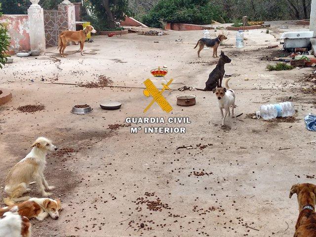 Animales maltrato maltratados perros abandono desnutrición detenido estepona