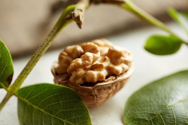 La dieta mediterránea suplementada con nueces contrarresta el deterioro cognitiv