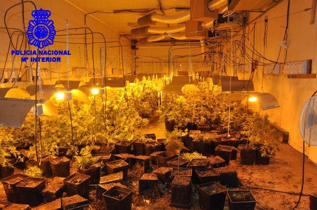 Nave con plantas de marihuana interceptada en Vigo.