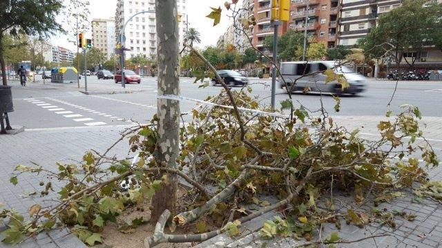 Rama caída por el viento en Barcelona