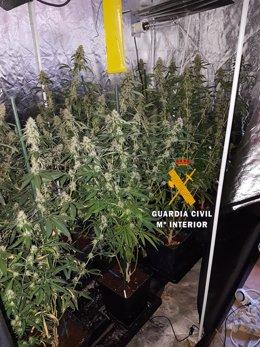 Viviero marihuana cultivo indoor interior colmenar guardia civil droga
