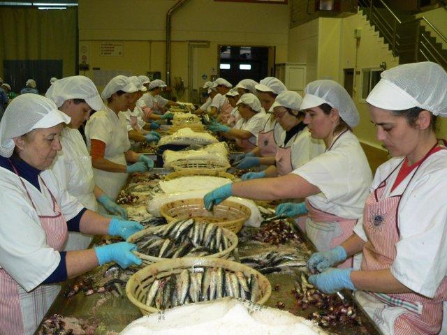 Trabajadoras Fábrica De Anchoa