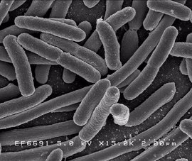El doble de muertes por bacterias multirresistentes que por accidentes de tráfico