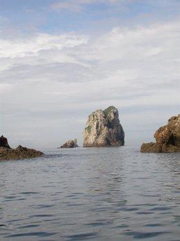 SEO/Birdlife Organiza Un Taller Para Dar A Conocer La Red Natura 2000 En El Mar