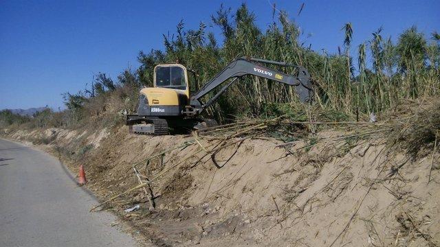 Imagen de los trabajos para recuperar el bosque de ribera