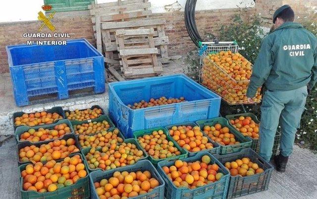 Intervenidos 500 kilos de naranjas y mandarinas en la A-49