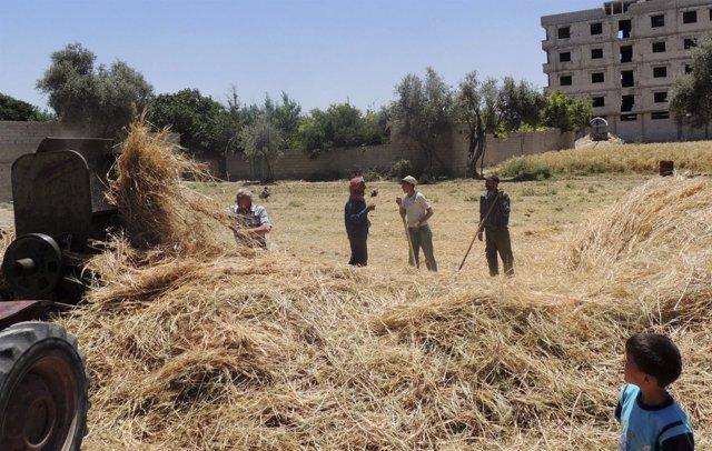 Agricultores en un suburbio de Damasco