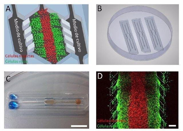 Cultivos de tumores en 3D