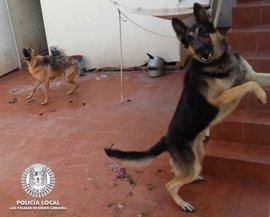 Herida de gravedad una mujer atacada por sus propios perros en Las Palmas de Gran Canaria