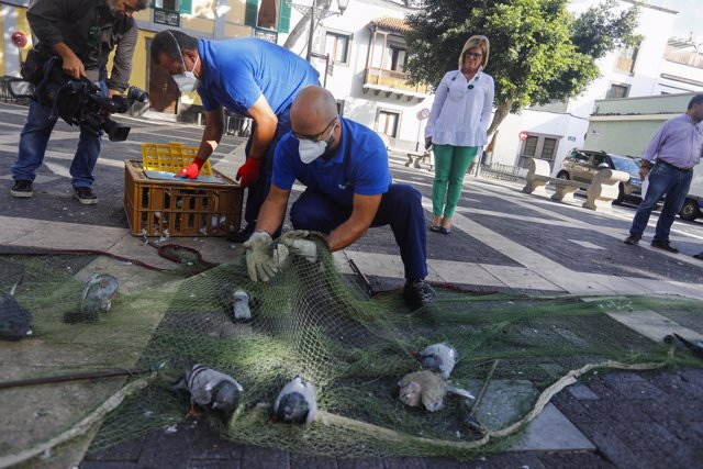El Ayuntamiento captura a más de 11.000 palomas