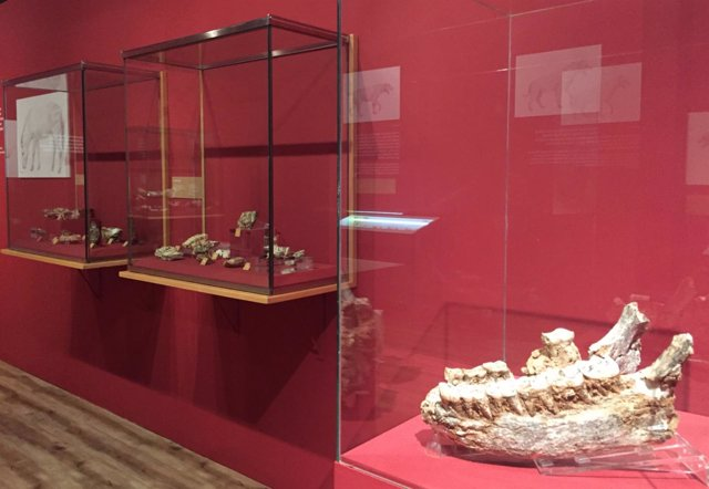 Algunas de las piezas de la exposición sobre Cueva Victoria