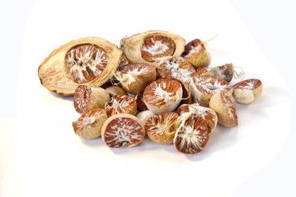 Investigan las propiedades anticancerígenas de las nueces de areca