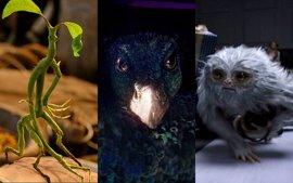 Así son las 9 criaturas más geniales de Animales fantásticos y dónde encontrarlos
