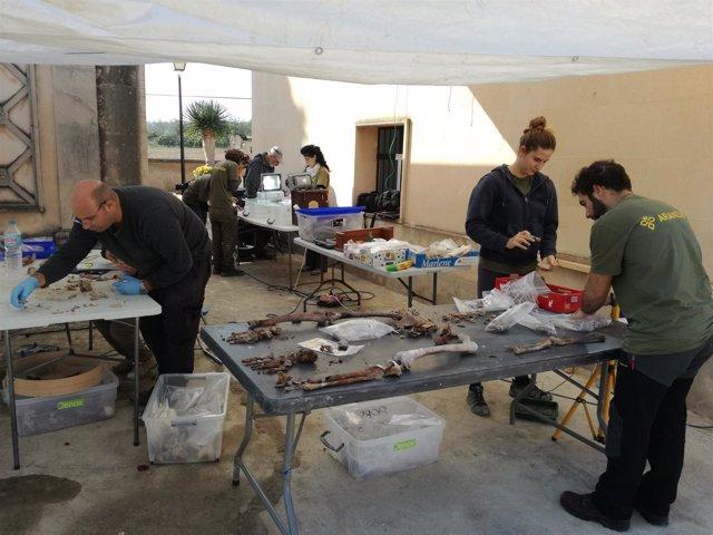 Expertos catalogando los restos humanos extraídos de la fosa
