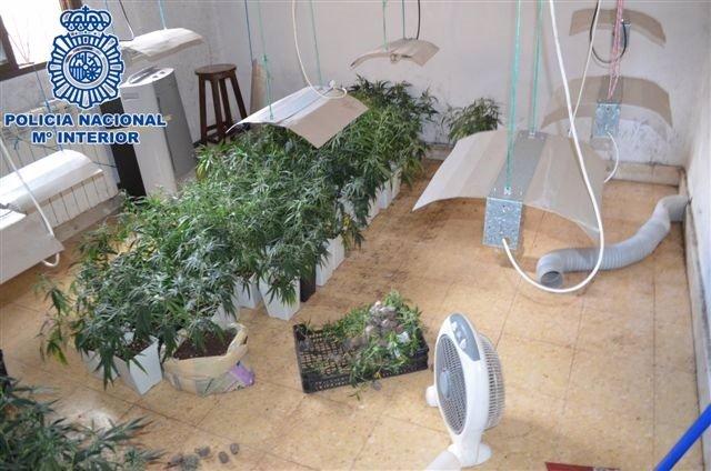 Laboratoria desmantelado de marihuana