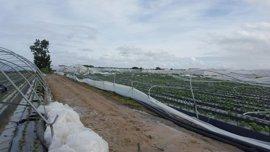 Un tornado daña la estructura de unas 40 hectáreas de fresas entre Palos y Mazagón