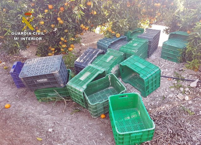 Guardia Civil esclarece la sustracción de seis toneladas de fruta