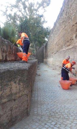 Actuación de Lipasam en la muralla de la Macarena.