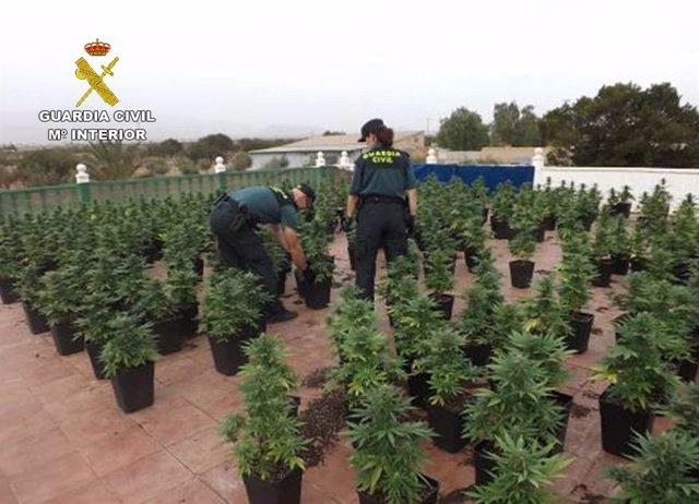 Cultivo ilícito de marihuana