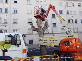 """Ecologistas en Acción de La Rioja critica """"la poda salvaje"""" de ciertos árboles de la calle San Francisco de Logroño"""