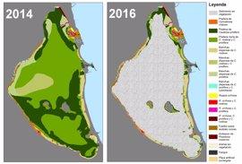 El 85% de las praderas marinas del Mar Menor ha desaparecido desde 2014 por la calidad y turbidez del agua
