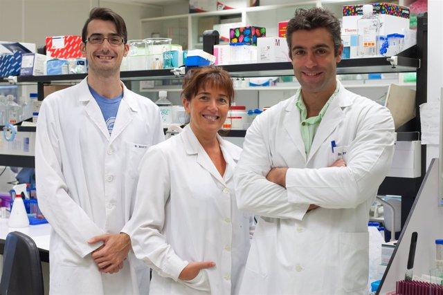 Diseñan Nuevas Moléculas Contra El Melanoma