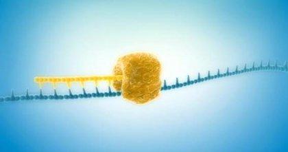 Crean un método para amplificar ADN a partir del genoma de una sola célula