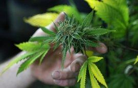 Un derivado cannabinoide puede servir para tratar la enfermedad de Huntington