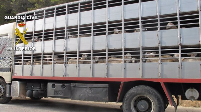 Camión utilizado para el transporte de los corderos.
