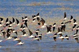 WWF exige a Gobierno y Andalucía que cesen las amenazas sobre Doñana y cumplan con UNESCO