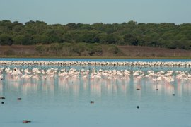 El Consejo de Doñana aborda este viernes el informe sobre su estado de conservación
