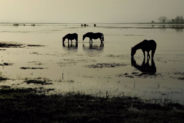 Caballos en la marisma de Doñana