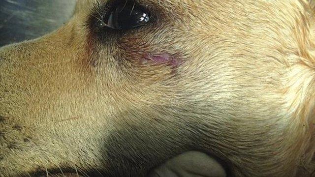 El perro que murió tras una agresión, Tuba