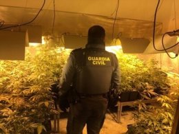 Plantación de marihuana 'indoor' en Carmona (Sevilla)