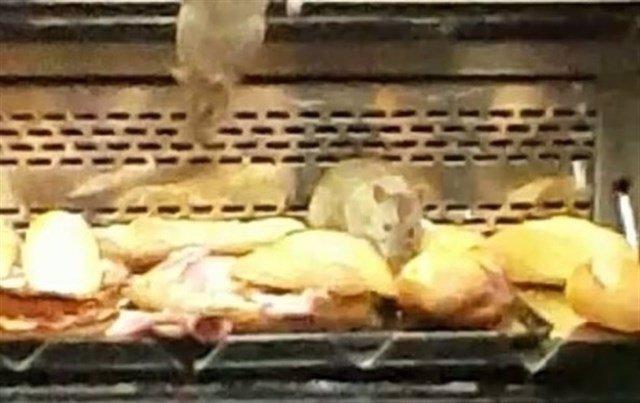 Imagen de ratas junto a comida en el establecimiento