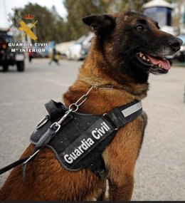 Perro de la Guardia Civil