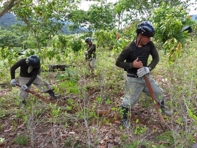 Erradicación de cultivos de coca en Perú