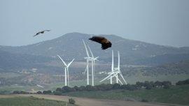 Podemos pide un plan de acción para prevenir la muerte de aves en tendidos eléctricos