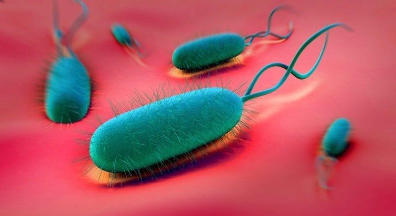 ¿Por qué el 'Helicobacter pylori' sobrevive en el estómago?