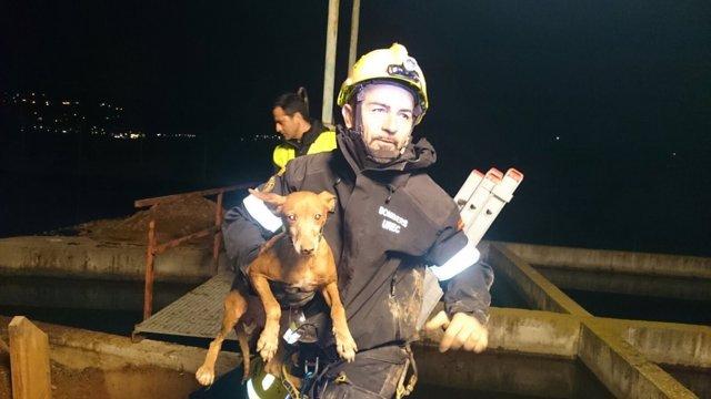 Un bombero junto al animal rescatado