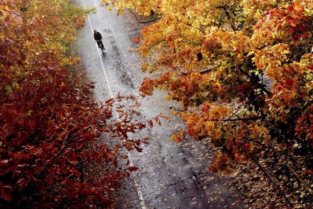 Otoño, hojas, hojas caídas, ciervo, ardilla, frío, invierno, otoñal, bosque