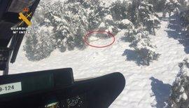 Localizan 33 cabezas de ganado ovino extraviado por la nieve en Nerpio
