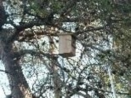 Caja colocada en un árbol