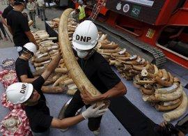 WWF pide a Hong Kong que acelere el fin del comercio de marfil tras la decisión de China