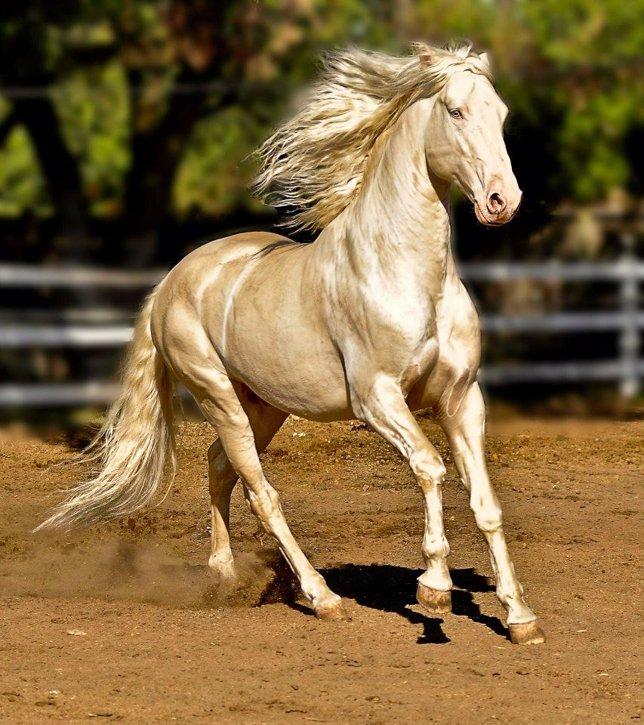 Resultado de imagen de el caballo mas bonito del mundo