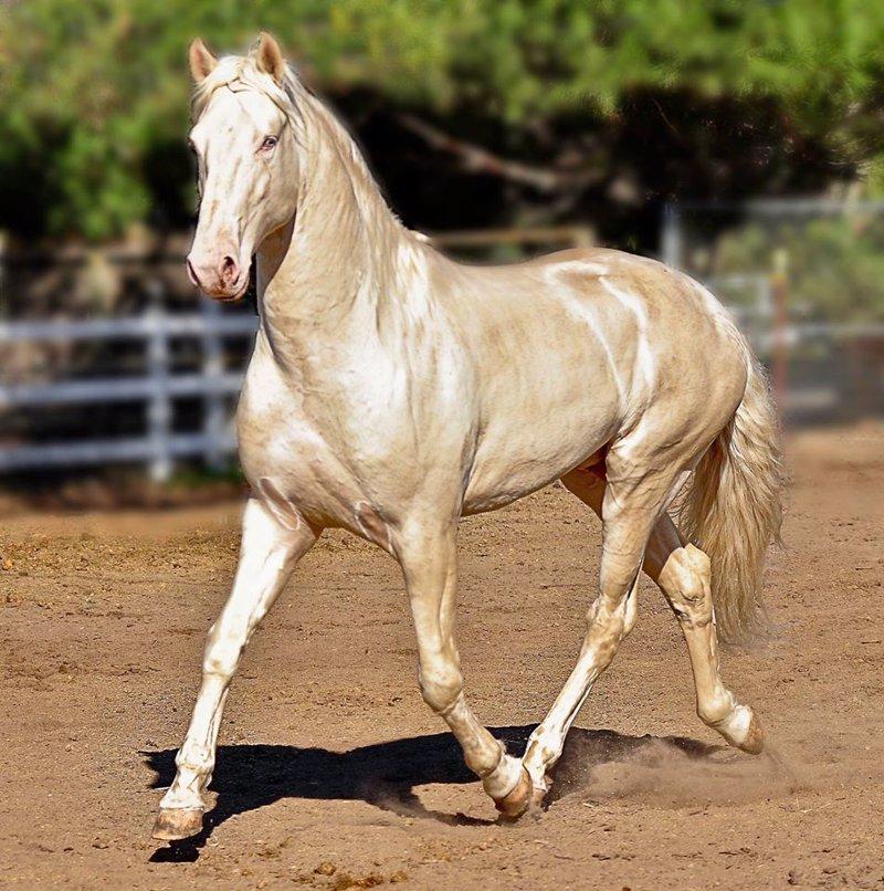 Este es probablemente el caballo m s bonito del mundo for El bano mas bonito del mundo