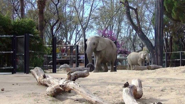 Instalación de elefantes del Zoo de Barcelona