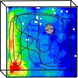 Registro de la actividad neuronal de una rata mientras explora un espacio abiert