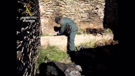 Detenido por la muerte de ocho perros en un cortijo en ruinas de la Alpujarra granadina