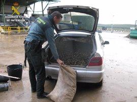 Detenidos en Estepa dos acusados de robar ocho toneladas de aceituna en Baena (Córdoba)